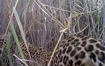Updated-Cape-Mountain-Leopard-Sighting-19-03-2019-01_thumbnail